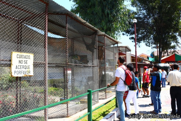 Parque Selva Alegre 5