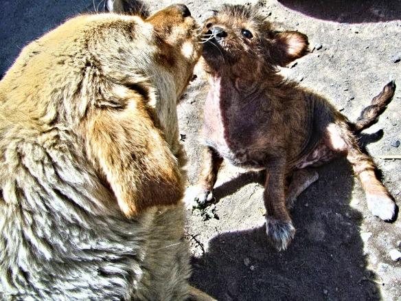 Bárbara y su cachorro